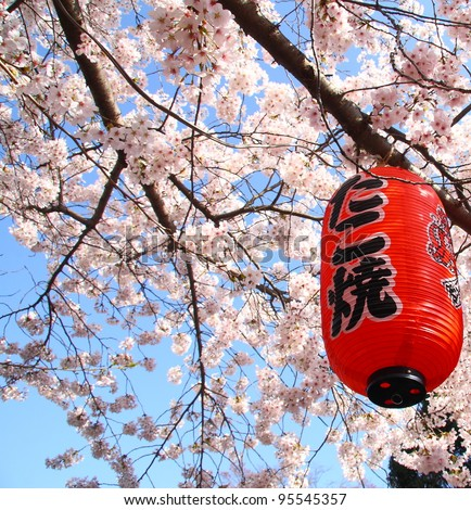 Red lantern during chery blossom in Japan - stock photo