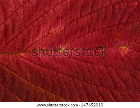 red leaf background or textures