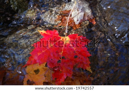 red leaf in stream - stock photo
