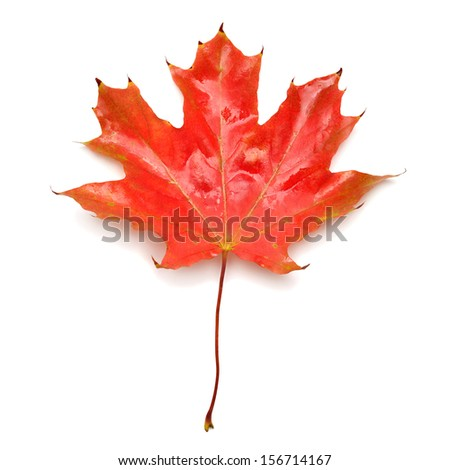 Red leaf isolated on white background