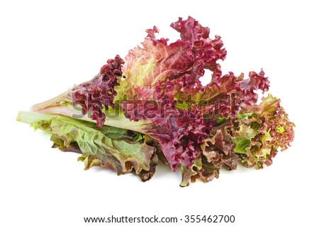 Red leaf lolo rosso lettuce isolated on the white background - stock photo