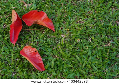 Red leaf on green grass field.
