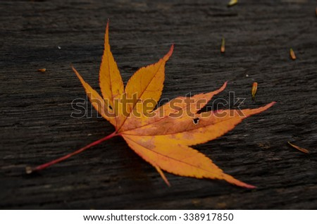 red leaf on the wooden floor - stock photo