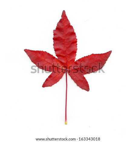 Red Leaf On White - stock photo