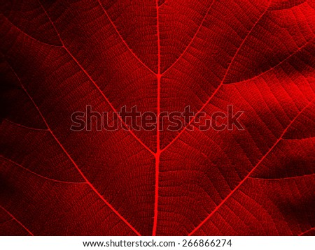 red leaf texture background ( teak leaf )
