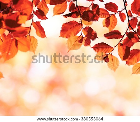 Red leaves. Autumn background with blurred bokeh. Selective focus