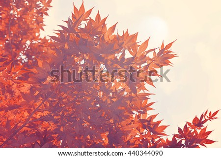 Red leaves in autumn, Vintage filter - stock photo