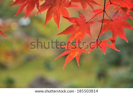 red leaves in Kyoto - stock photo