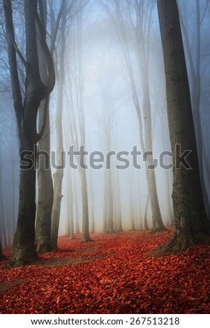 Red leaves into the forest - stock photo