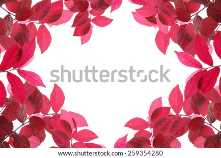 red leaves , isolate on white - stock photo