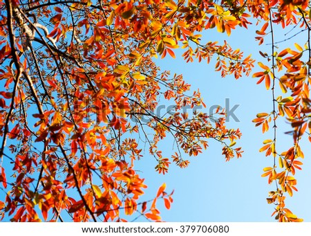 red leaves, leaves change color