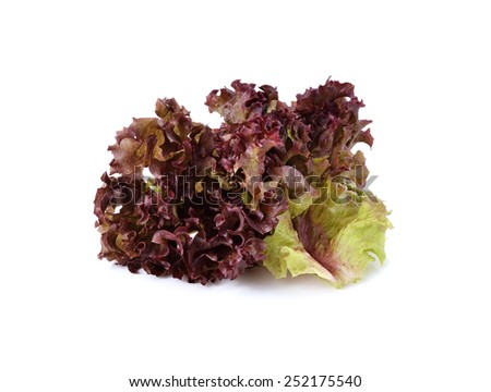 red lettuce isolated on white background - stock photo