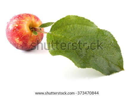 Red little apple with big leaf