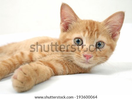 Red little cat on the white background. - stock photo