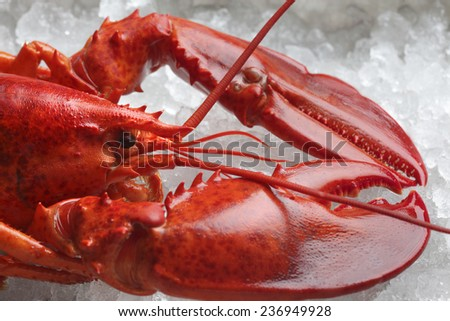 red lobster on ice - stock photo
