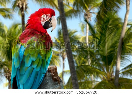 Red Macaw on the nature - stock photo
