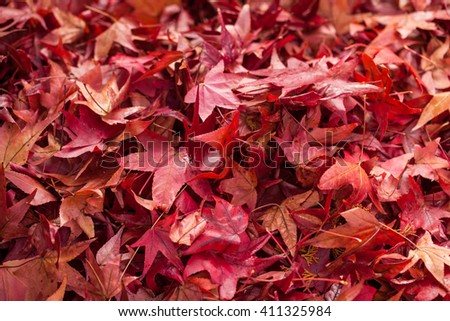 Red maple falling leaves on the earth background. Also available in vertical format. - stock photo