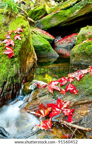 Red Maple leafs in deep jungle, Phukradueng National Park ,Thailand natural