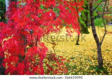 Red maple leaves at Eikando temple in Kyoto, Japan - stock photo