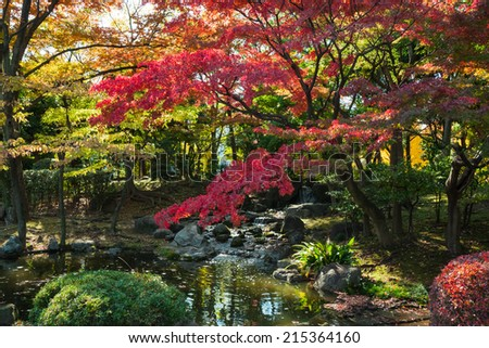 red maple leaves in autumn - stock photo