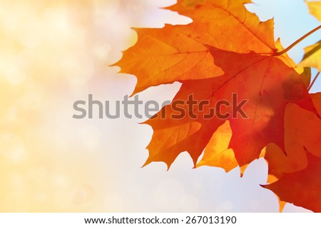 Red maple leaves with sunlight autumn background - stock photo
