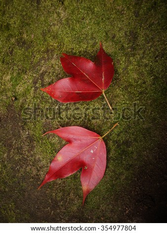 red maple on green background