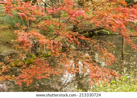 Red maples planted on the shore and reflection in a Japanese garden near Heian Shrine. - stock photo