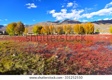Red meadow under blue sky with Yellow Tree and Mountain in Daocheng, SiChuna, China