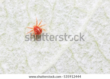 red mite on plant in the wild