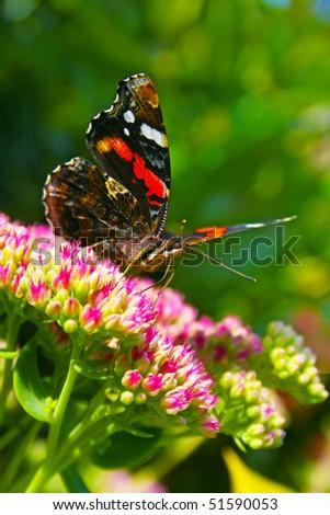 Red Monarch portrait - stock photo