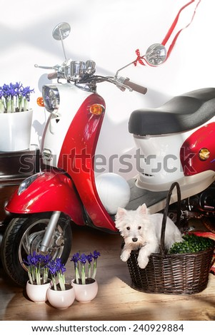Red moped and a dog - stock photo