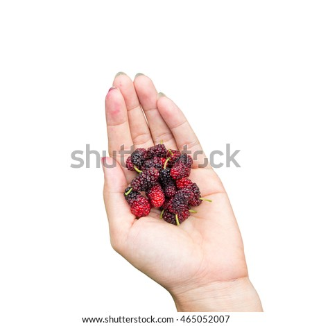 red mulberries fruit on hand, isolated on white background.