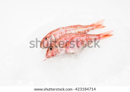 Red mullet stock images royalty free images vectors for Red mullet fish