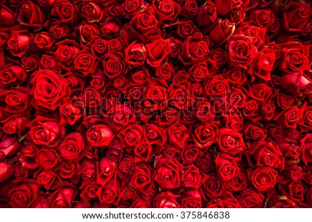 Red natural roses background - stock photo