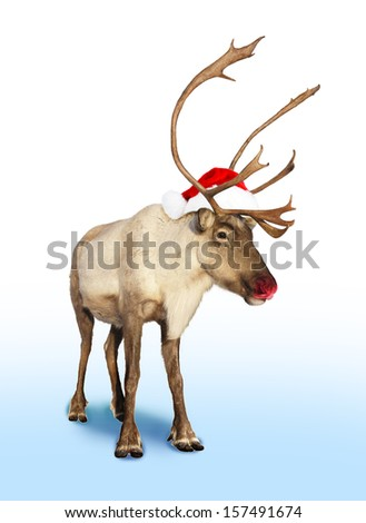 red nose reindeer or caribou with Christmas hat  - stock photo