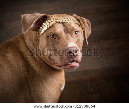 Red Nosed Pit Bull - stock photo