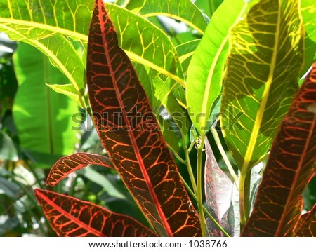 Red on green - jungle vegetation