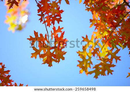 red,orange maple leaves against cloudy sky - stock photo
