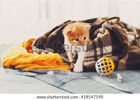 Red orange newborn kitten in a plaid blanket. Sweet adorable tiny kitten on a serenity blue wood background play with cat toy and ribbon. Small cat. Funny kitten crawling and meowing - stock photo