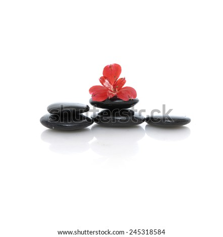 red orchid on black stones on white background - stock photo