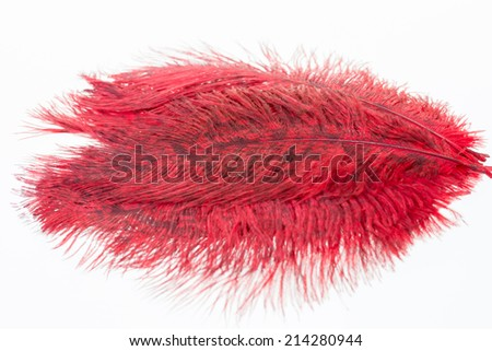 Red ostrich feathers close up - stock photo