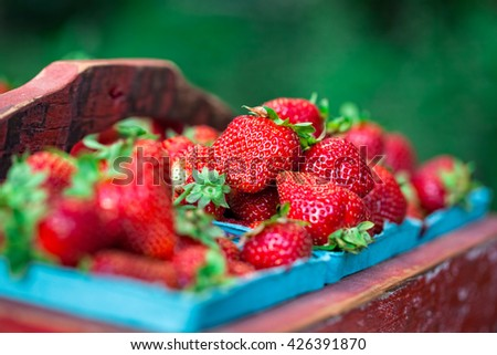 Red painted vintage wooden crate full of fresh organic strawberries - stock photo