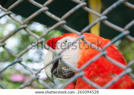 Red parrot behind fence,scarlet macaw - stock photo