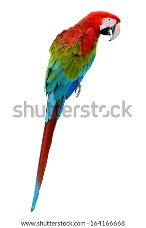Red parrot macaw - stock photo