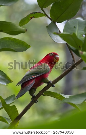 red parrot with green wings - stock photo