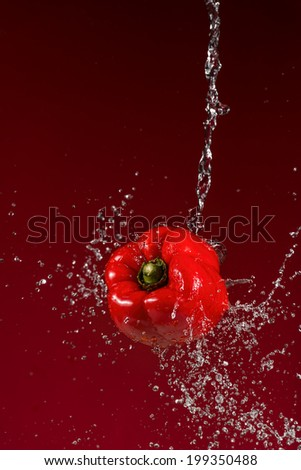 Red Pepper Splash on Red Background - stock photo