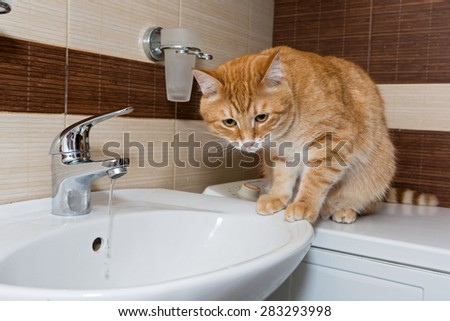 Red pet cat interested in water in the sink - stock photo