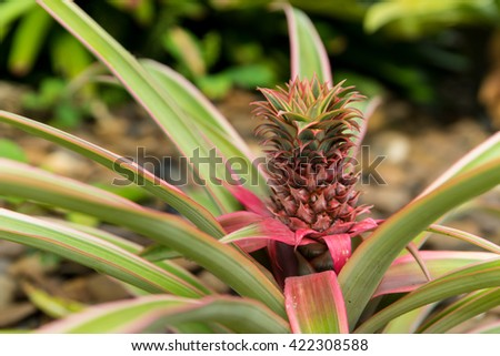 Red Pineapple, decoration in the garden - stock photo