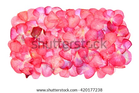 red pink brown geranium perspective, dry delicate flowers and petals of pelargonium, isolated on white background scrapbook pressed, border, edging