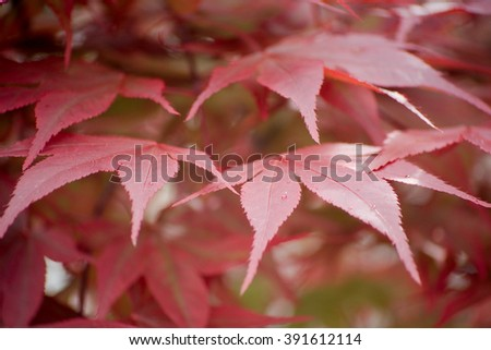 Red plant - stock photo
